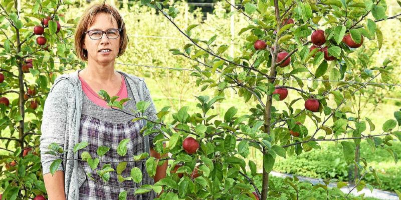 verger pommes poires